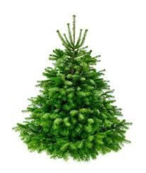 датские елки