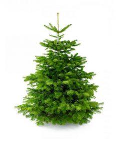 Датская живая елка